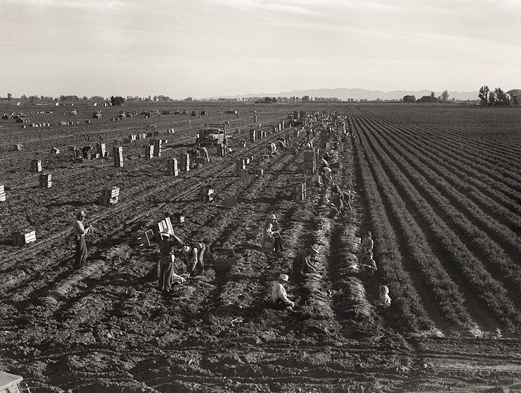 the characteristics of farming during the 1930s in the united states The great depression left many people homeless during the 1930s the stock  market  the dust bowl included nearly all of the midwest states many farmers.
