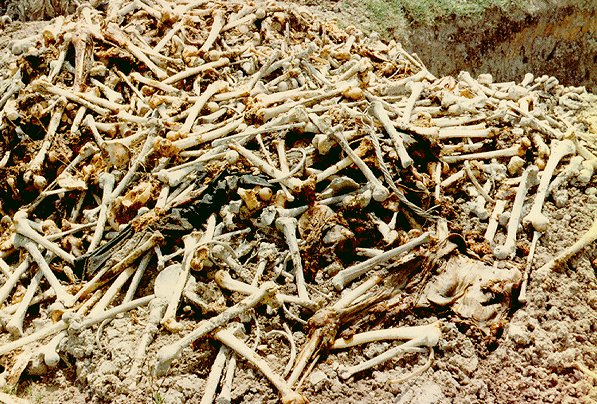 Genocide of Cambodia Killing Fields